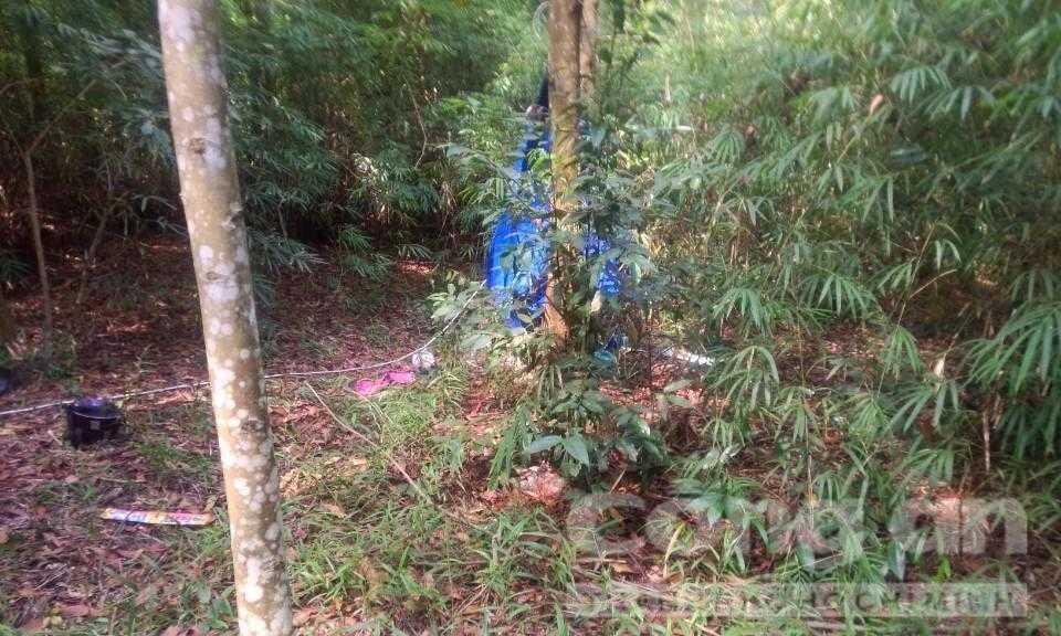 Hiện trường vụ tự sát trong rừng Tràm (Ảnh: Công an TP.HCM)