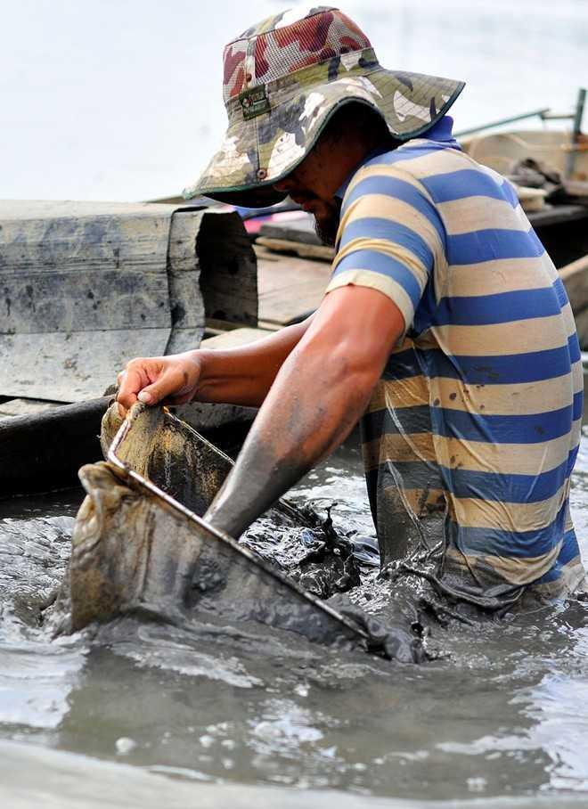 Hiện có khoảng 30 người ở khắp các tỉnh thành như Đồng Nai, TP HCM, Long An... làm nghề đãi trùn. Phương tiện của họ gồm thuyền, vợt lưới và các loại vật dụng chứa trùn.