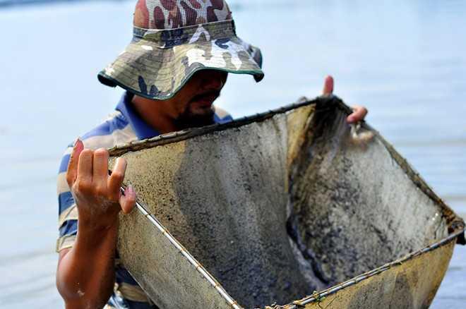 Ông Nguyễn Văn Thạnh (50 tuổi, ngụ phường Tân Mai, TP Biên Hòa) cho biết, trước đây hành nghề đánh cá trên sông Đồng Nai. Những năm gần đây, thu nhập từ việc chài lưới không đủ nuôi sống gia đình nên ông chuyển sang nghề đãi trùn chỉ. Ông nói:
