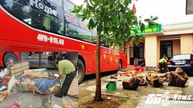 Số lượng lớn gỗ gúy vận chuyển bằng xe khách bị lực lượng CSGT phát hiện. (Ảnh: Công Thành).