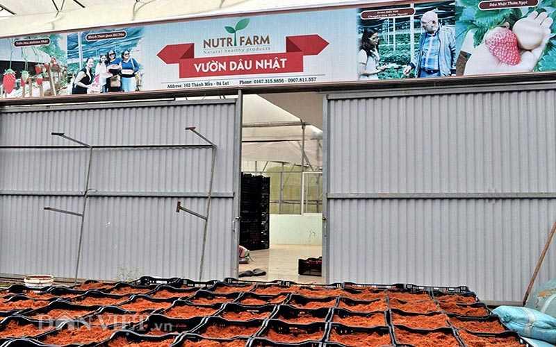Những hình ảnh quy trình thu hoạch, vận chuyển, nguyên liệu trồng của trang trại sản xuất thực phẩm công nghệ cao Đà Lạt.