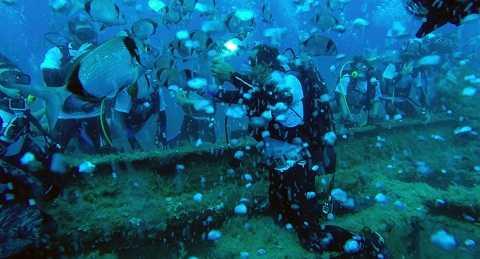 Các thợ lặn gần con tàu đắm