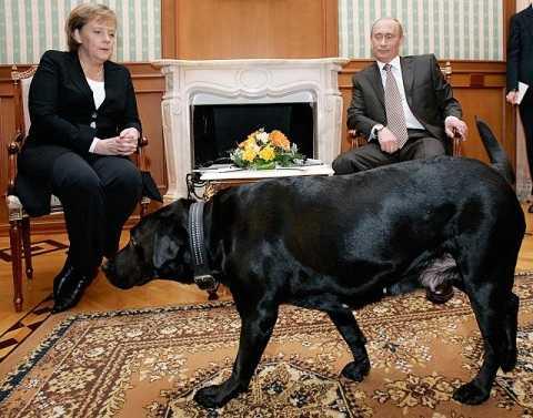 Tổng thống Nga Putin và bà Merkel ngắm chú chó Konin của ông Putin ở Sochi, Nga