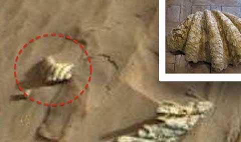 Nhiều người cho rằng đây là hình ảnh của chiếc vỏ ngao trên sao Hỏa.