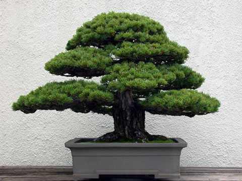 loại cây gia đình tuyệt đối nên tránh không trồng trong nhà.