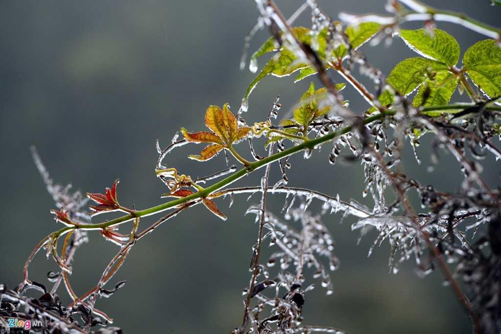 Theo ông Hải, nguyên tắc để có tuyết rơi thì nhiệt độ phải dưới 1 độ C và cần một số điều kiện khác nữa như trạng thái bầu trời có sương mù, mưa hay không….