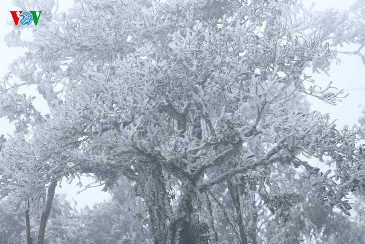 Đêm 16/12, khi nhiệt độ giảm xuống từ 0-1 độ C, băng giá đã xuất hiện tại đèo Ô Quy Hồ, thị trấn Sapa, tỉnh Lào Cai (độ cao 2.000 m so với mực nước biển).