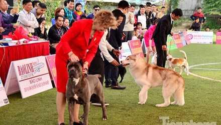 Anh Hoàng Mộc Cương (33 tuổi, trưởng BTC cuộc thi) cho biết: Trong hai ngày diễn ra, cuộc thi đã thu hút khoảng 300 chú chó tham dự. Những chú chó này thuộc các giống chó khác nhau của Việt Nam và thế giới.