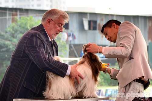 Theo BTC, chương trình diễn ra trong hai ngày với hai vị giám khảo (người Nga và người Philippines) chấm điểm độc lập để đảm bảo khách quan. Mỗi ngày, các chú chó dự thi sẽ tham gia những nội dung khác nhau nhằm đánh giá về phẩm chất, hình dáng, tinh thần, khả năng hòa đồng, khả năng tập tuyện... Và mỗi ngày giải