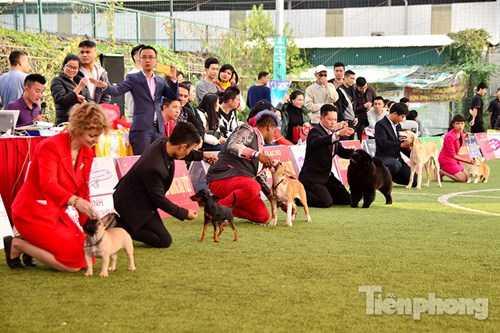 Mỗi phần thi là sự cạnh tranh của nhiều chú chó.