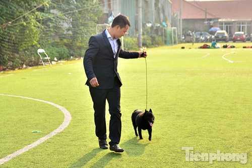 Chú chó trong ảnh là chú chó giống Schipperke đầu tiên ở Việt Nam. Chú Schipperke này gần 12 tháng tuổi, khi trưởng thành nặng khoảng 8kg (to hết cỡ), được mang từ Bỉ về. Đây là loài chó chăn cừu.