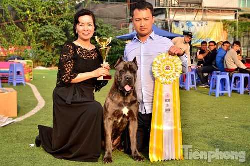 Anh Kiên mua chú chó Hummer khi chú mới khoảng 4 tháng tuổi với giá 5.000 USD. Hiện tại gia đình anh Kiên chỉ bán những chú chó con với giá 25 triệu đồng/con nhỏ và cũng không có ý định bán chú chó Hummer này
