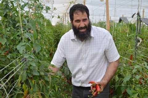Anh Fahim trong khu trồng ớt ngọt. (Ảnh: Hữu Chiến/Vietnam+)