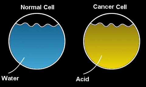 Tế bào khỏe mạnh chứa hầu hết là nước, tế bào ung thư chứa hầu hết là axit.