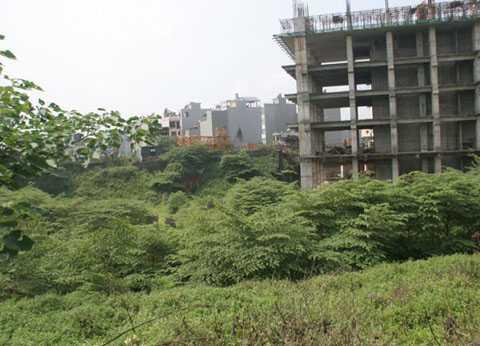 Dự án bỏ hoang, cây cối mọc um tùm
