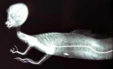 """FeeJee còn được gọi là """"cá khỉ"""" bởi xác ướp kỳ quái này có thân trên là của khỉ, nửa mình dưới là của cá"""