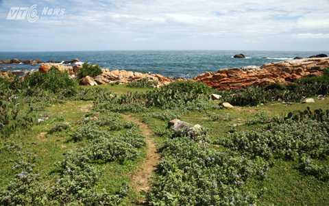 Vẻ hoang sơ với màu xanh của cỏ cây, màu vàng đỏ của đá bazan và màu xanh của biển trời tạo nên một bức tranh đầy màu sắc ở Ghềnh Đèn.