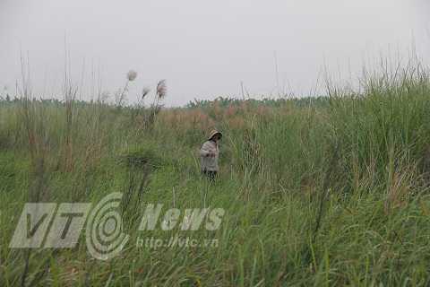 Một góc bãi bồi Văn Khê, nơi phát hiện đàn thú quý hiếm