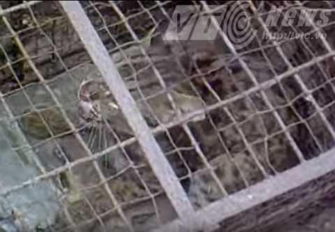 Một con báo mèo con bị bắt nhốt hồi đầu năm.   Ảnh do người dân cung cấp