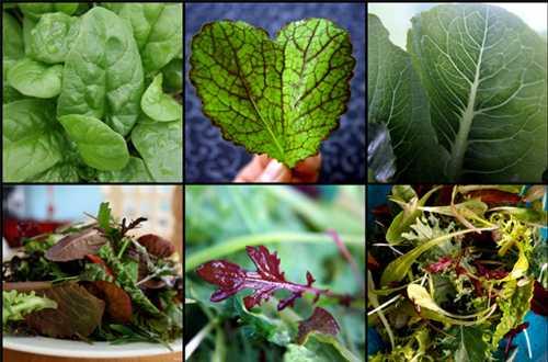 Hãy ăn nhiều rau lá xanh để bổ sung chất xơ.