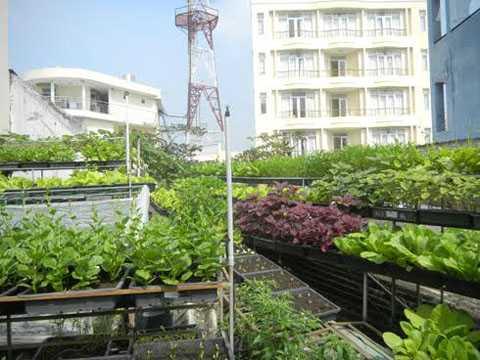 Vườn rau sạch xanh mớt phủ kín ban công, sân thượng của người thành phố