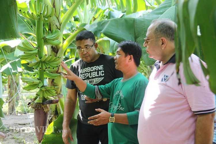 Chuyên gia người Philippines (giữa) cùng các thương gia Dubai xem chuối.