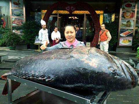 Con cá mú 260kg