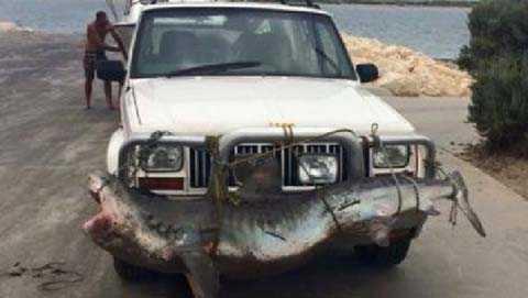 Hình ảnh về chú cá mập trên đường. Nguồn: news.com.au