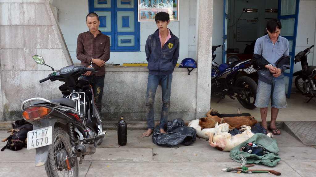 Ba thanh niên bị bắt giữ cùng 12 con chó đã chết và súng điện chuyên dùng để trộm chó - Ảnh: Quang Duy
