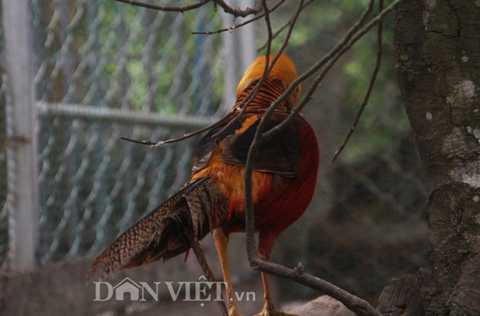 """Nhìn ở góc độ nào, """"cửu sắc"""" của chú chim cũng toát lên, một vẻ đẹp tự nhiên quyền quý."""