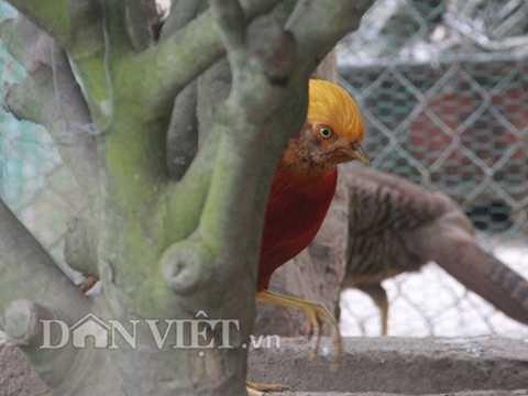 """Thấy """"vật thể lạ"""" (máy ảnh) hướng về phía   mình, chú chim nhanh chóng lẩn vào gốc cây, song vẫn dương đôi mắt sáng   quắc, dề thương xem """"vật thể lạ"""" làm gì mình."""