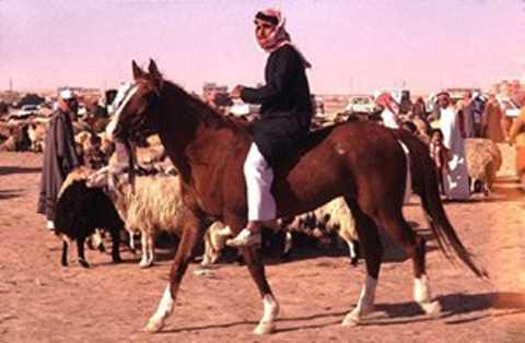Ngựa Ả Rập gắn liền với sự quý phái.