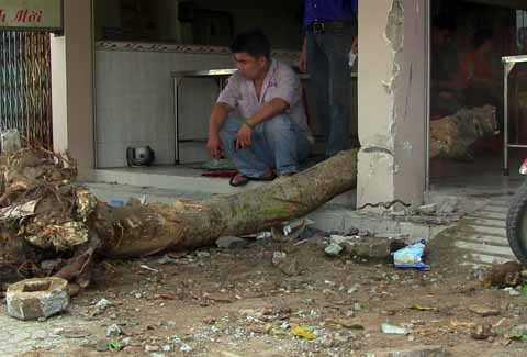 Gốc cây và cột bê tông bị xe tải tông hư hỏng đổ gãy.