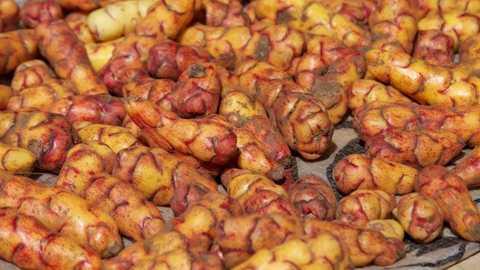 Một giống khoai tây của Peru. (Nguồn: pri.org)