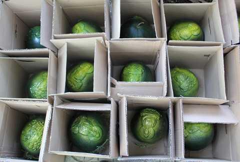 Những trái dưa hấu thành phẩm được đóng hộp chuẩn bị giao cho khách. Ảnh: Zen Nguyễn