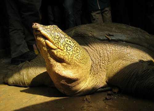 Rùa Đồng Mô