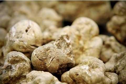 Nấm Alba - loại nấm nằm trong danh sách các thực phẩm đắt nhất thế giới