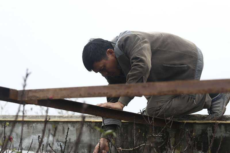 Khách đến chọn đào xong, ông Hàm cẩn thận trèo lên mái để treo mảnh giấy đánh dấu.