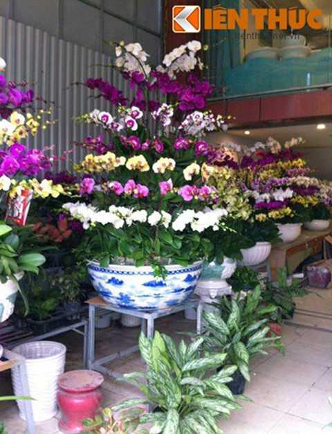 Hình ảnh một chậu lan hồ điệp 7 tầng có   giá gần 70 triệu đồng. Ngoài chi phí mua hoa, khách mua cần chi thêm   tiền vận chuyển các chậu hoa