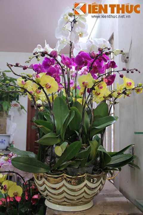 Lan hồ điệp giá 7 triệu đồng bán phổ biến   tại các hàng hoa, cây cảnh ở Hoàng Hoa Thám, Quảng Bá, Yên Phụ (Hà   Nội). Trung bình các cành lan được bán từ 300.000 đồng/cành.