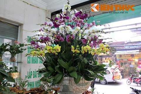 Không chỉ đẹp, đắt tiền, người chơi   lan ngày Tết cũng cần chú ý để chăm sóc hoa được bền lâu, tươi tốt. Chị   Thu (một nhân viên bán hàng hoa tại Hà Nội) chia sẻ: