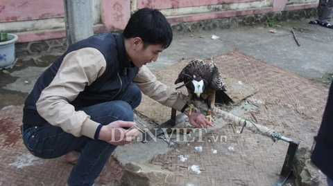 Trong việc nuôi chim săn mồi đòi hỏi   người chơi phải có kiến thức về giống loài đặc biệt này. Đôi bàn tay anh   Quang trầy xước vì huấn luyện chim.