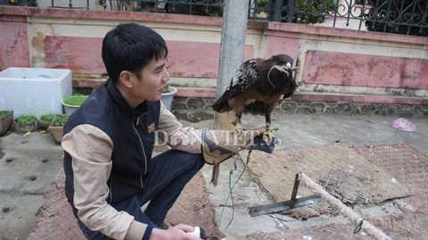 """""""Thú nuôi chim săn mồi cũng tốn   nhiều công phu lắm, phải đầu tư mua bộ dụng cụ như găng tay 3 lớp, dây   buộc chân, chụp móng vuốt, còi, bịt mắt… Giá mỗi món cũng """"ngốn"""" khá   nhiều tiền. Nhưng khi đã huấn luyện được rồi, chúng như những người bạn   của mình"""" – anh Quang chia sẻ."""