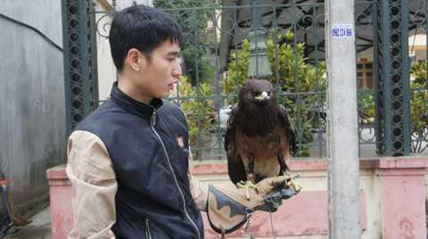 Cần thiết nhất phải có một chiếc bao tay   bằng da để bảo vệ tay không bị thương khi cho chim đậu và bộ dây buộc   chân để giữ chúng trong tầm kiểm soát trước khi thả chúng bay tự do.