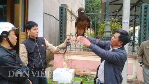 Mỗi ngày sau giờ làm, anh Quang phải đỡ   chim đại bàng 3, 4 tiếng để nó làm quen với người, tập tính dạn dĩ,   không bị hoảng loạn.
