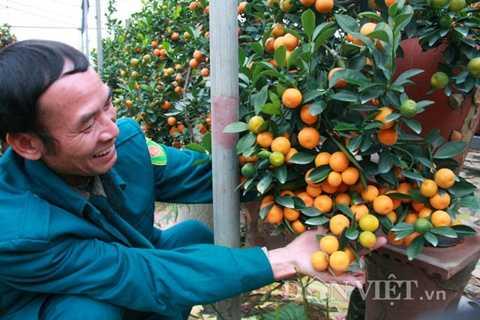 Ông Mạnh tâm sự, tốn nhiều công chăm sóc, đòi hỏi nhiều kỹ thuật nhưng quất bonsai là hướng đi mới để các nhà vườn gia tăng lợi nhuận từ nghề này.