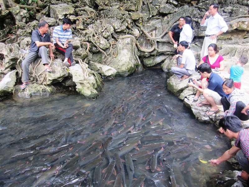 Đàn cá luôn bơi hướng về trong hang