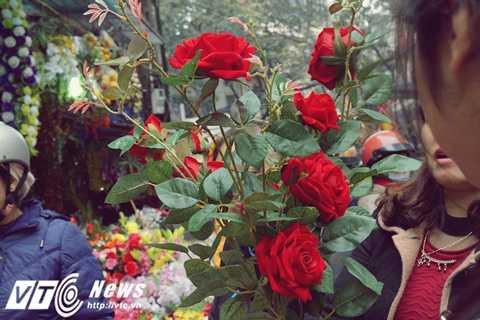 Những bông hoa hồng đỏ này hiện nay có giá 40.000 đồng/bông, đã tăng 10.000 - 15.000 đồng/bông so với ngày thường.