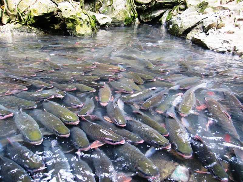 Đàn cá rất đông đúc và thân thiện