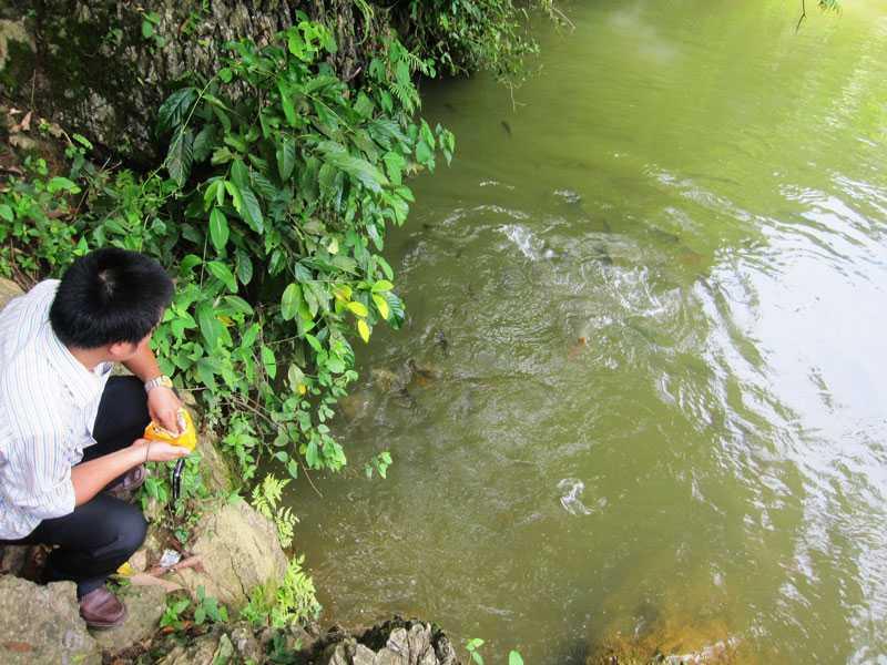 Nếu hạ mực nước đập, sẽ có cơ hội gặp những con cá đeo khuyên tai vàng vòng bạc